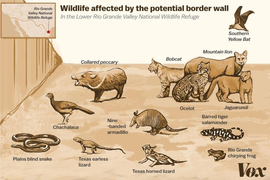 border_wall_wildlife