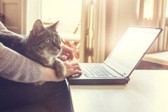 woman-her-cat-working-laptop-computer-contented-tabby-who-lying-across-lap-arm-home-typing-data-close-up-65005706