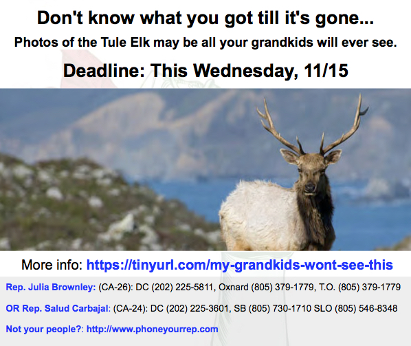 Deadline this Wednesday, Nov. 15th! Save the Tule Elk!