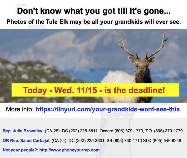 DEADLINE TODAY! Write. It takes less than 5 minutes to save the Tule Elk.