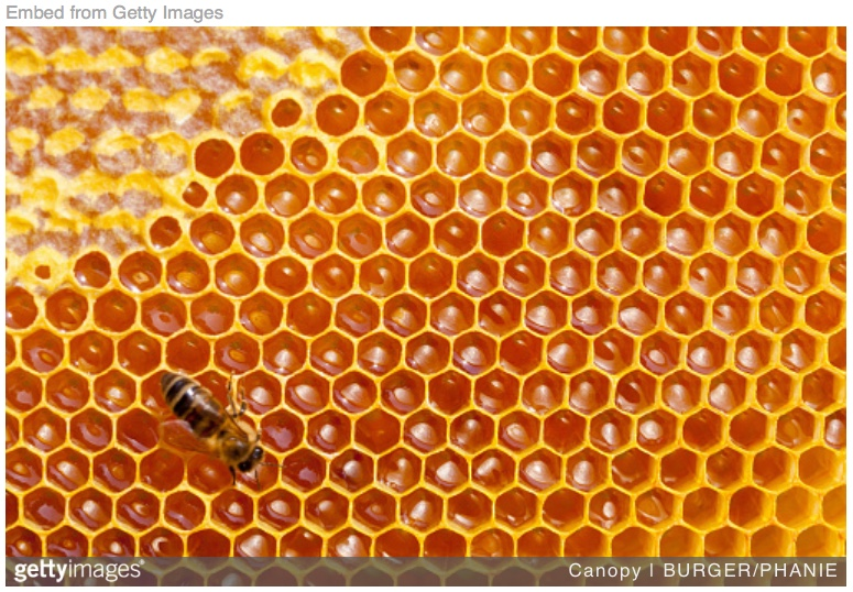 Tues – 11/13: Bees need you to write some stinging comments in their defense. Today. By 11:59pmEST.