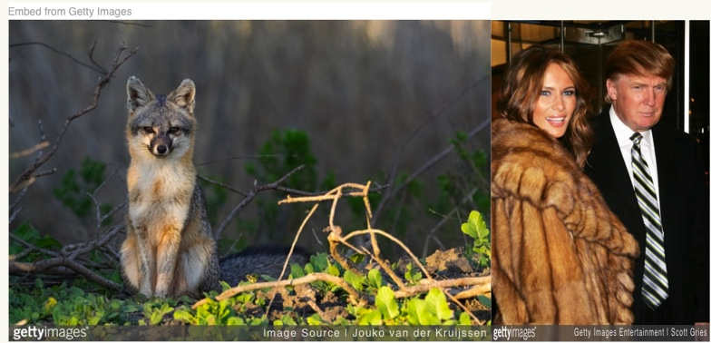 """Mon 1/28: Ban all commercial fur-trapping in CA. """"Yes"""" on AB273."""