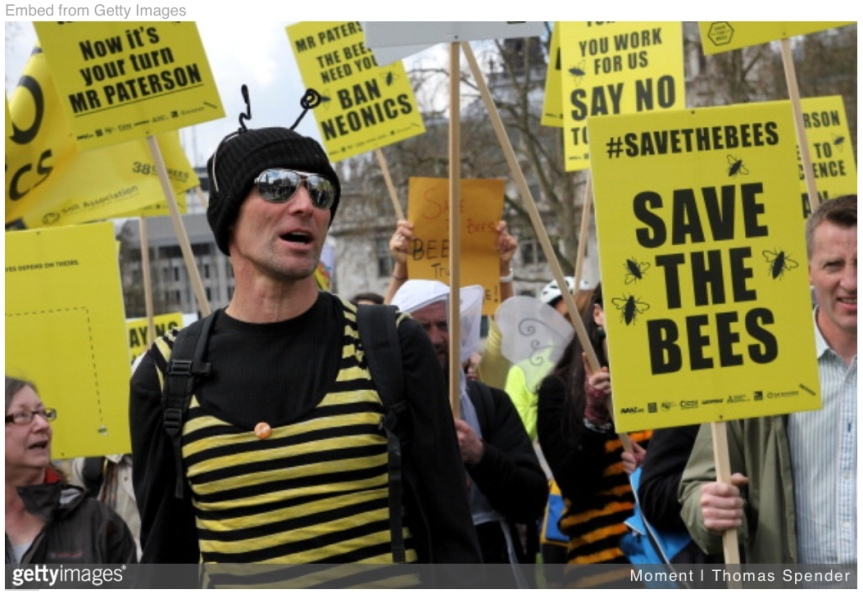 Tues 2/19: Buzz through this action on bees…