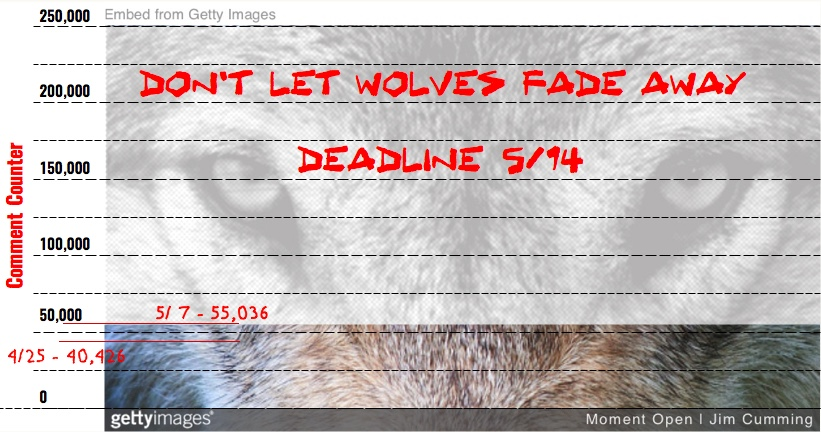 Tues 5/7:  Wolf Protection – Part 2.  Your taxes fund the slaughter of millions of wild animals a year…