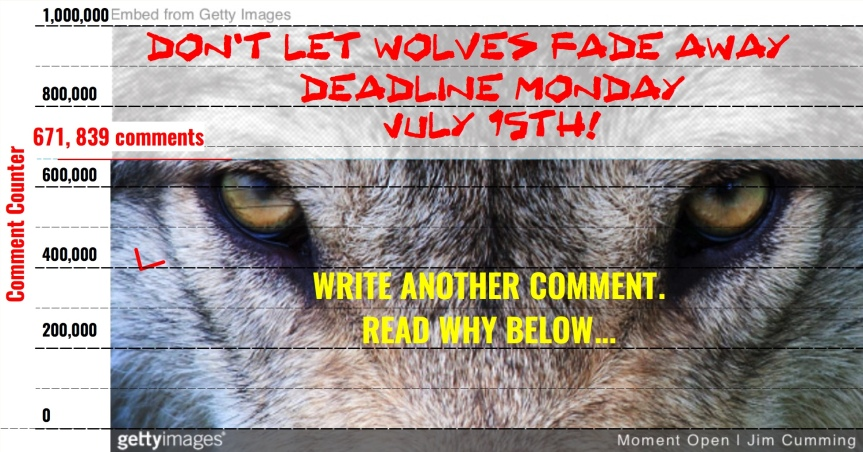 Sun 7/14 – Mon 7/15:  We're up to over 600,000 comments to protect the wolves!!! But there are a lot of copies…Let's pile on some new ones. Deadline – Monday 7/15, 11:59 pm EST