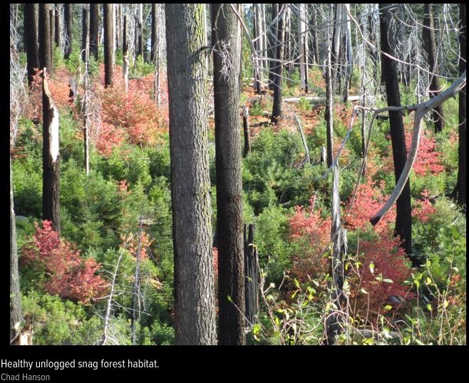snag forest
